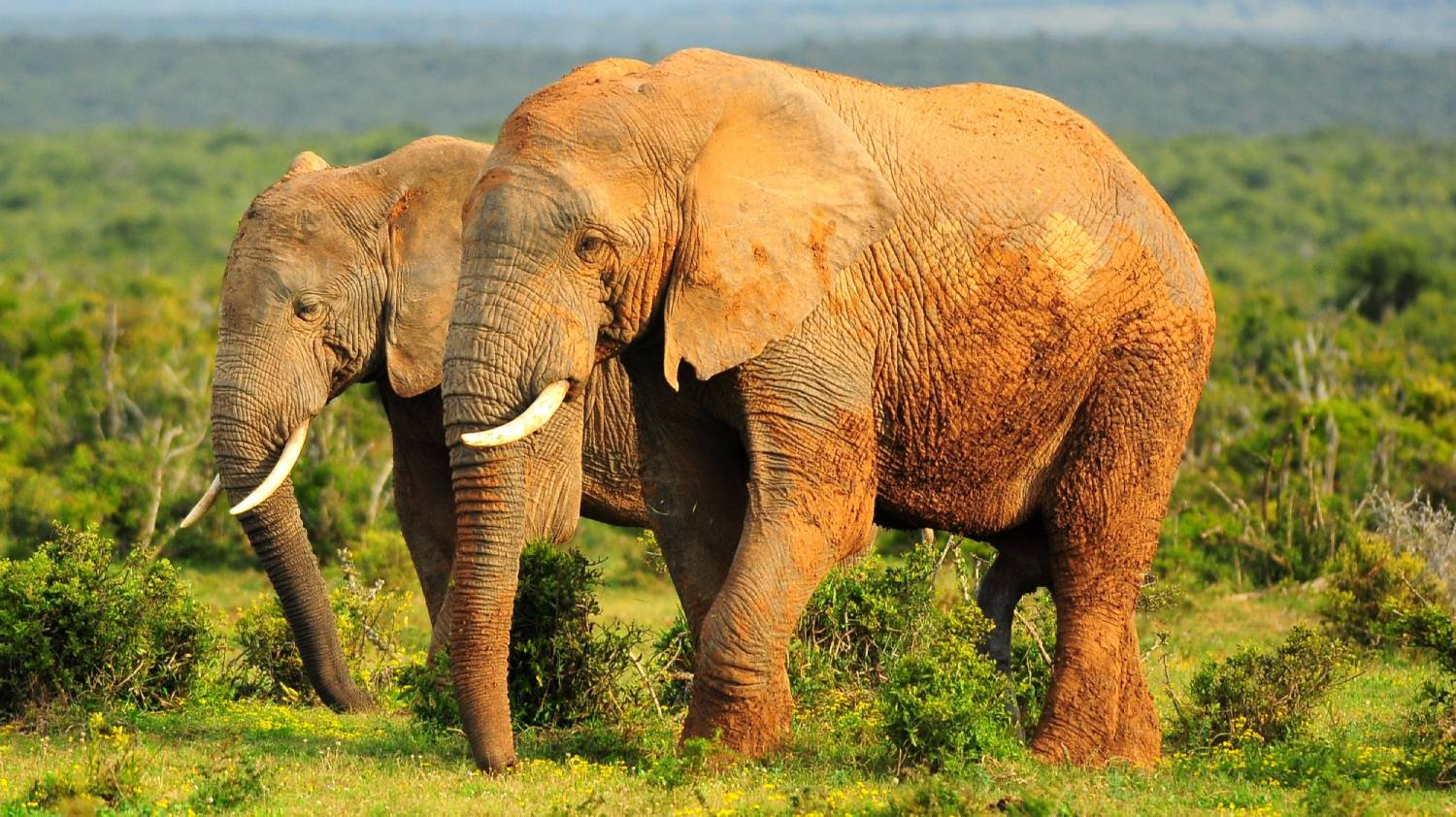 Addo Elephant National Park - Things To Do On The Garden Route