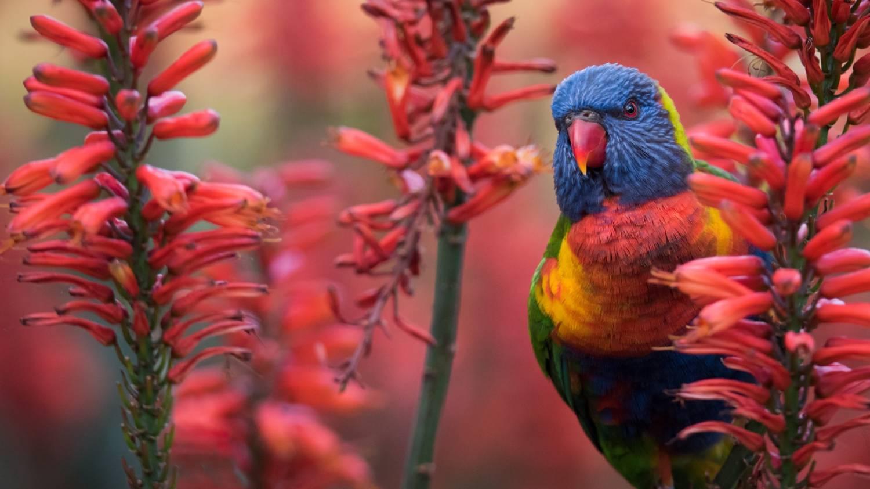 Adelaide Botanic Gardens - Things To Do In Adelaide