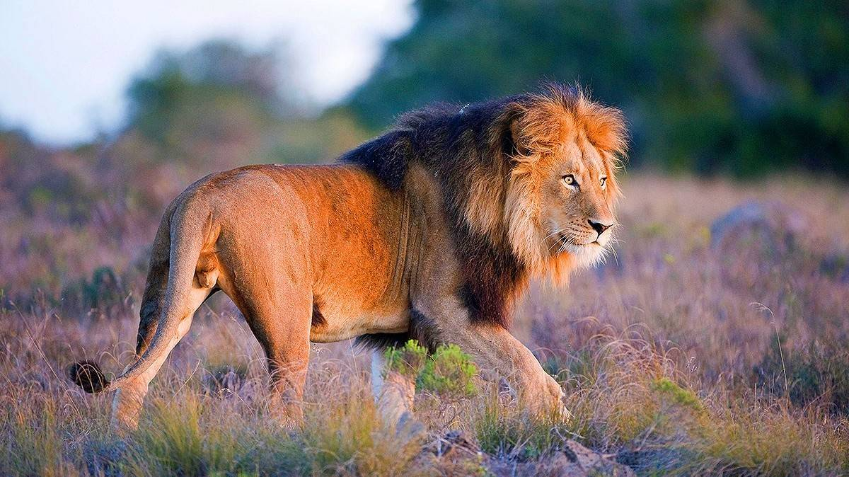 Amakhala Game Reserve - The Best Places To Visit In South Africa