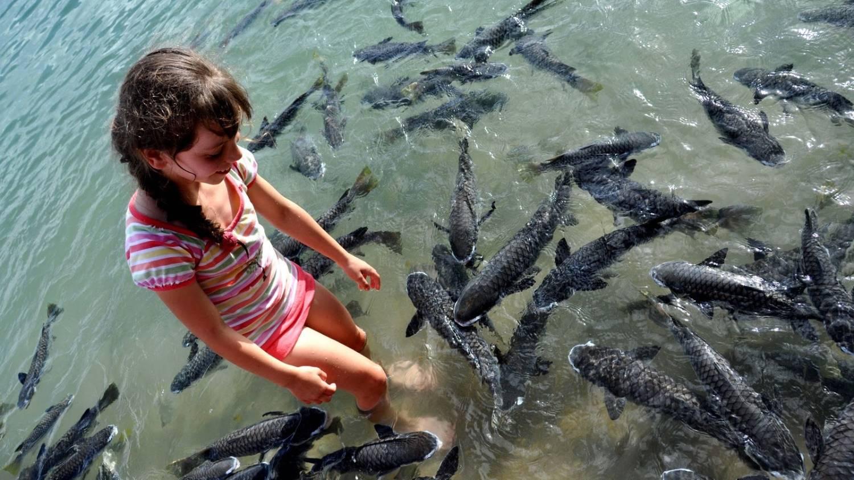 Aquascene - Things To Do In Darwin