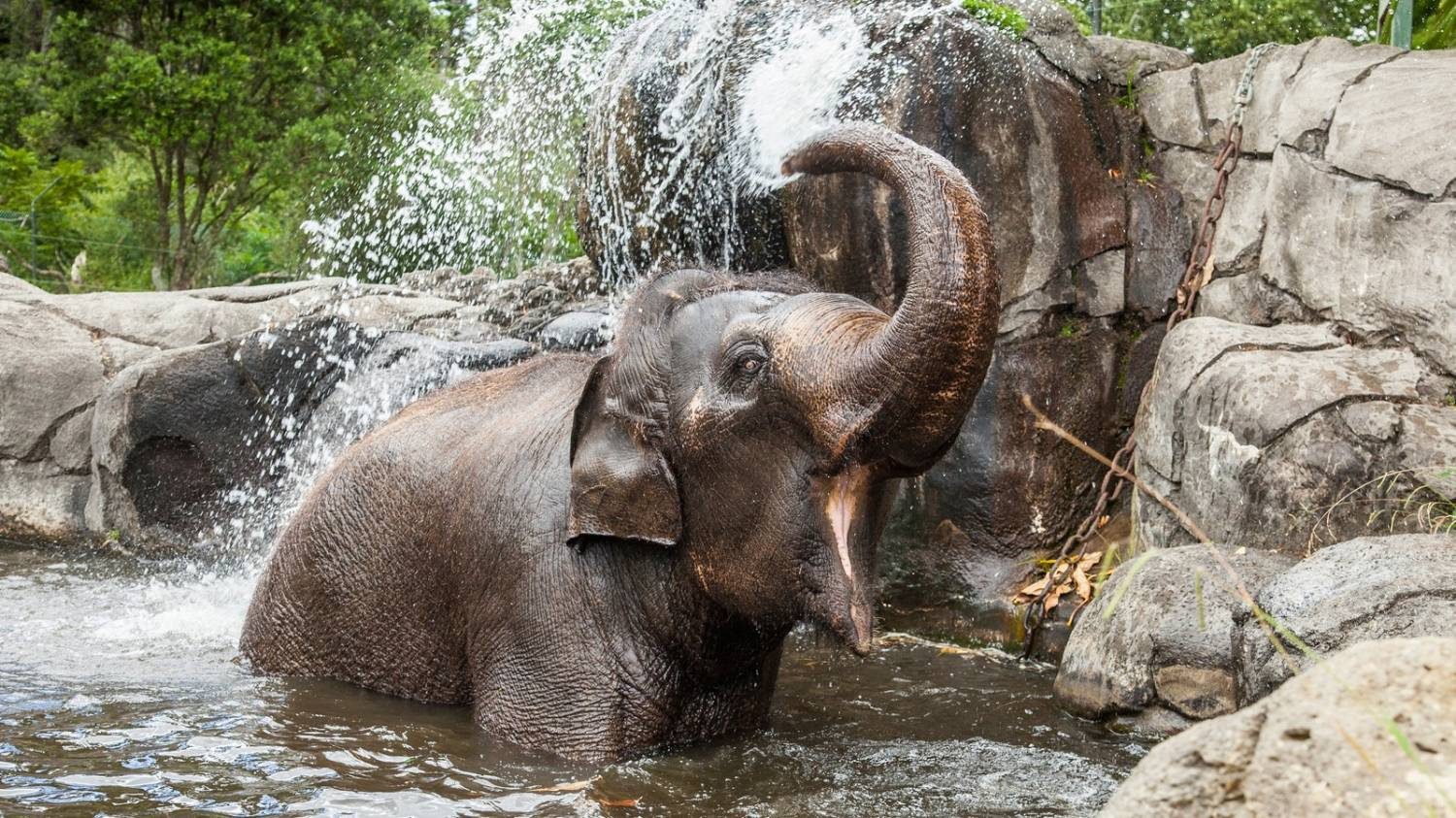 Auckland Zoo - Things To Do In Auckland