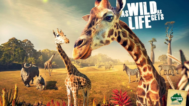 Australia Zoo - Things To Do In Brisbane