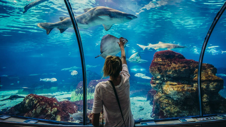 Barcelona Aquarium (L'Aquarium) - Things To Do In Barcelona