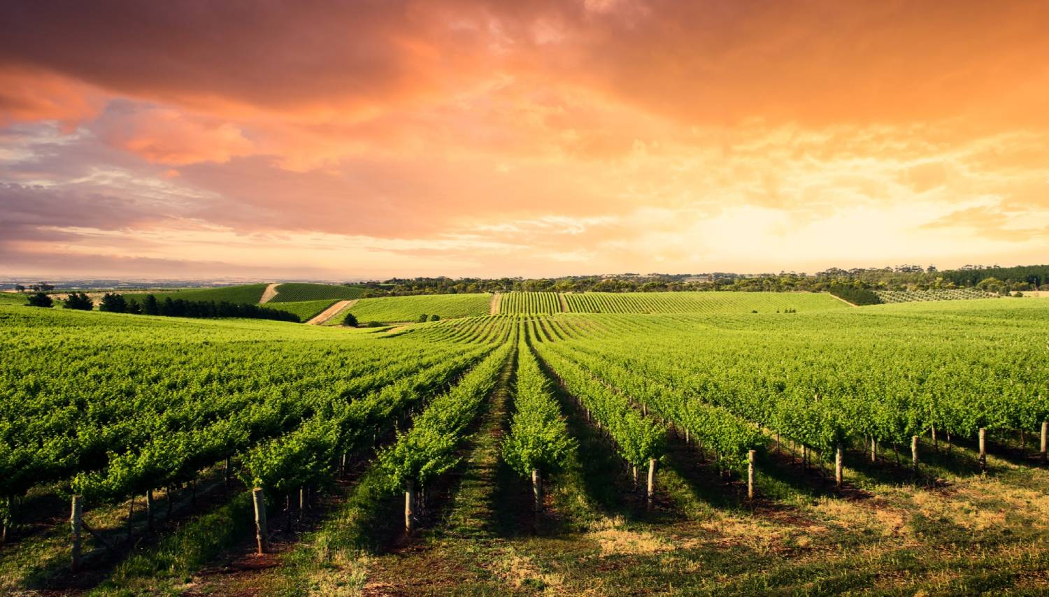 Barossa Valley - Things To Do In Adelaide