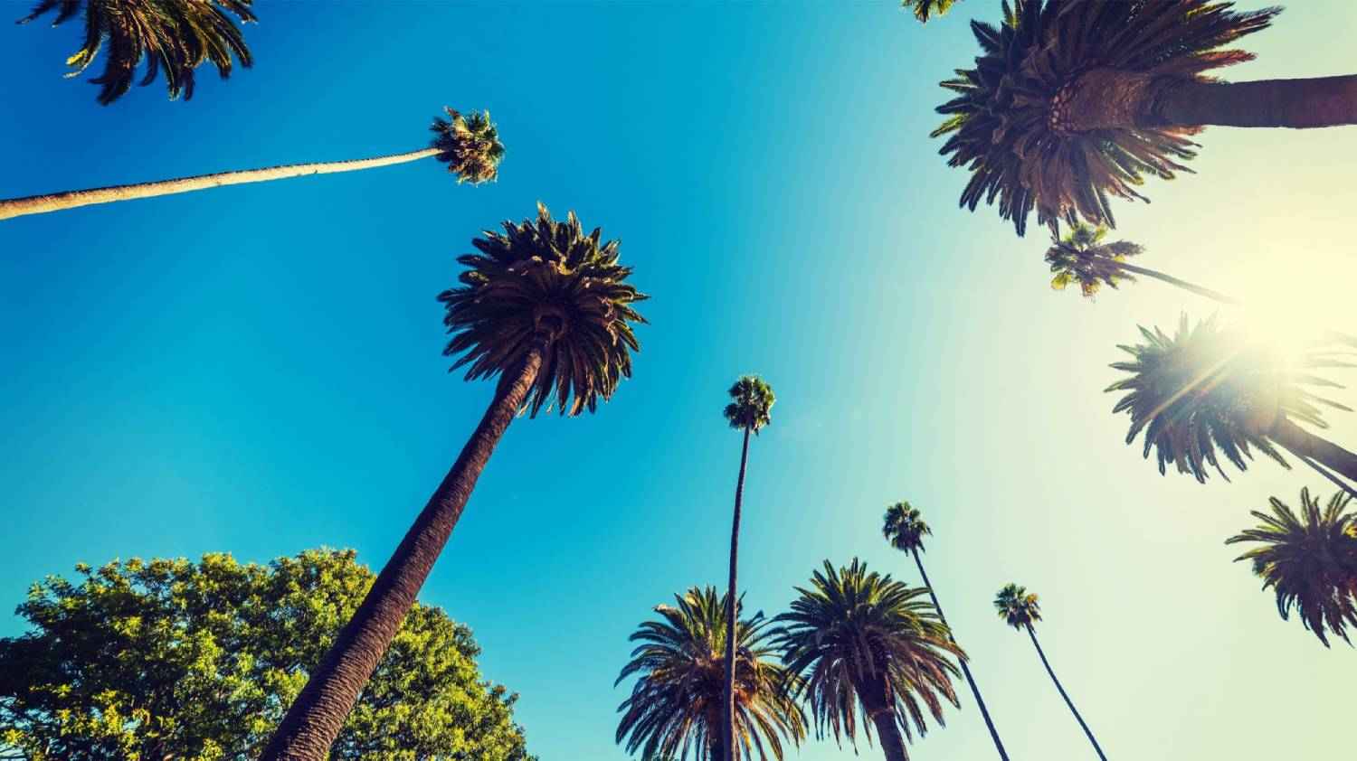 Beverly Hills - Things To Do In Los Angeles