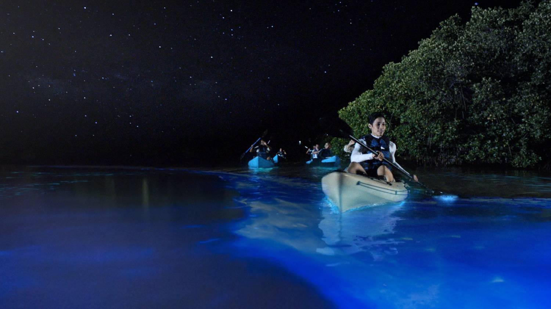 Bioluminescent Bay - Things To Do In San Juan