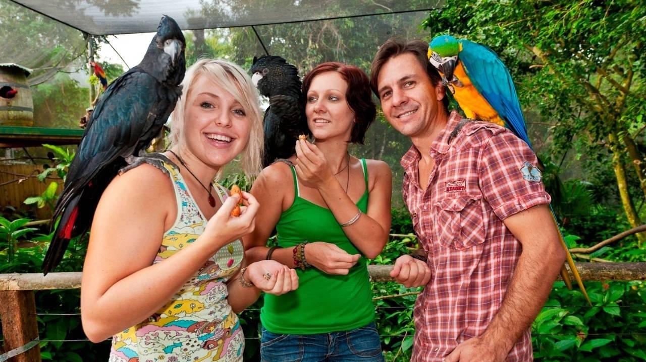 Birdworld Kuranda - Things To Do In Cairns