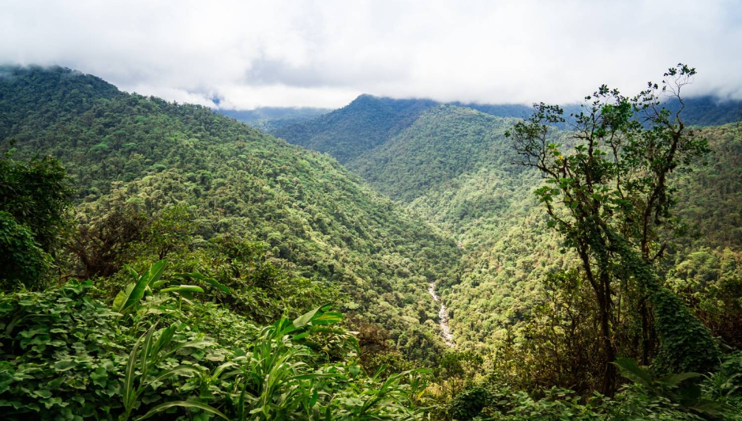 Braulio Carrillo National Park - Things To Do In San Jose