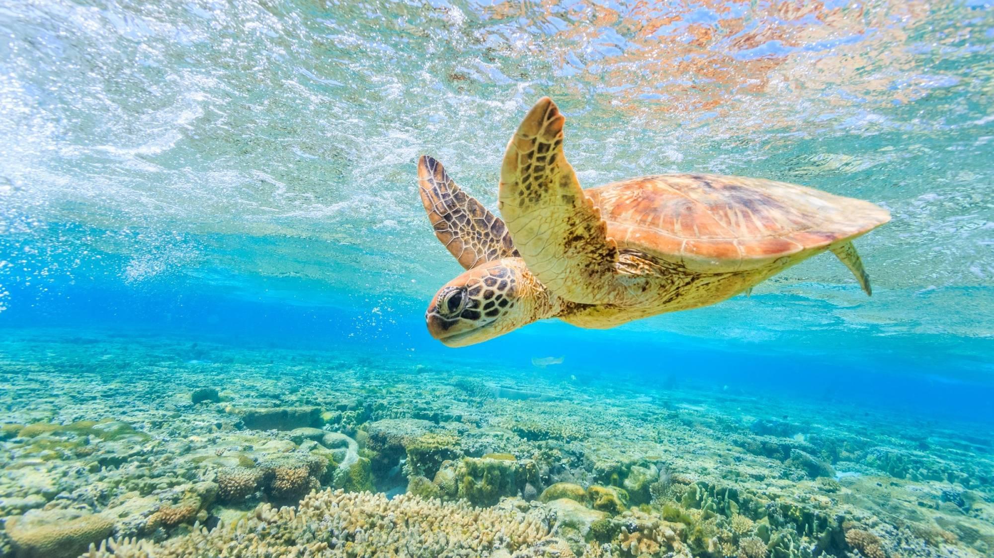 Cairns - Travel Blog