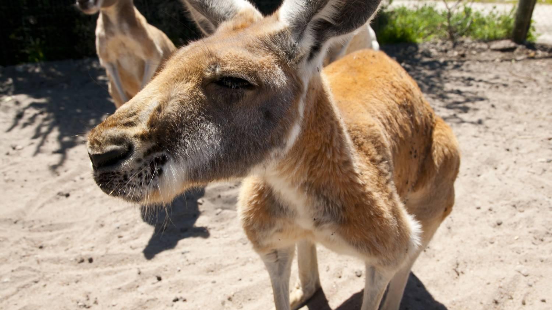 Caversham Wildlife Park - Things To Do In Perth