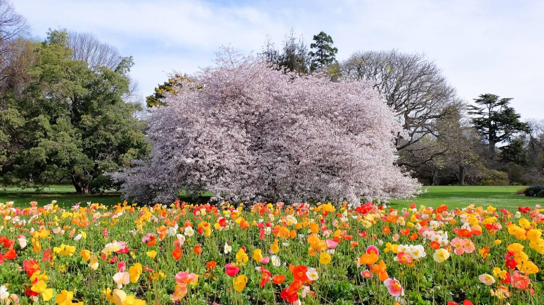 Christchurch Botanic Gardens - Things To Do In Christchurch
