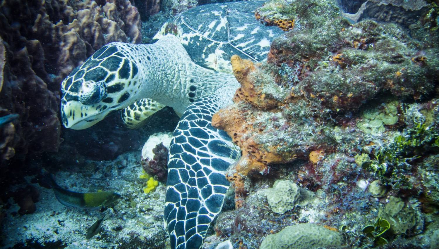 Columbia Reef - Things To Do In Cozumel