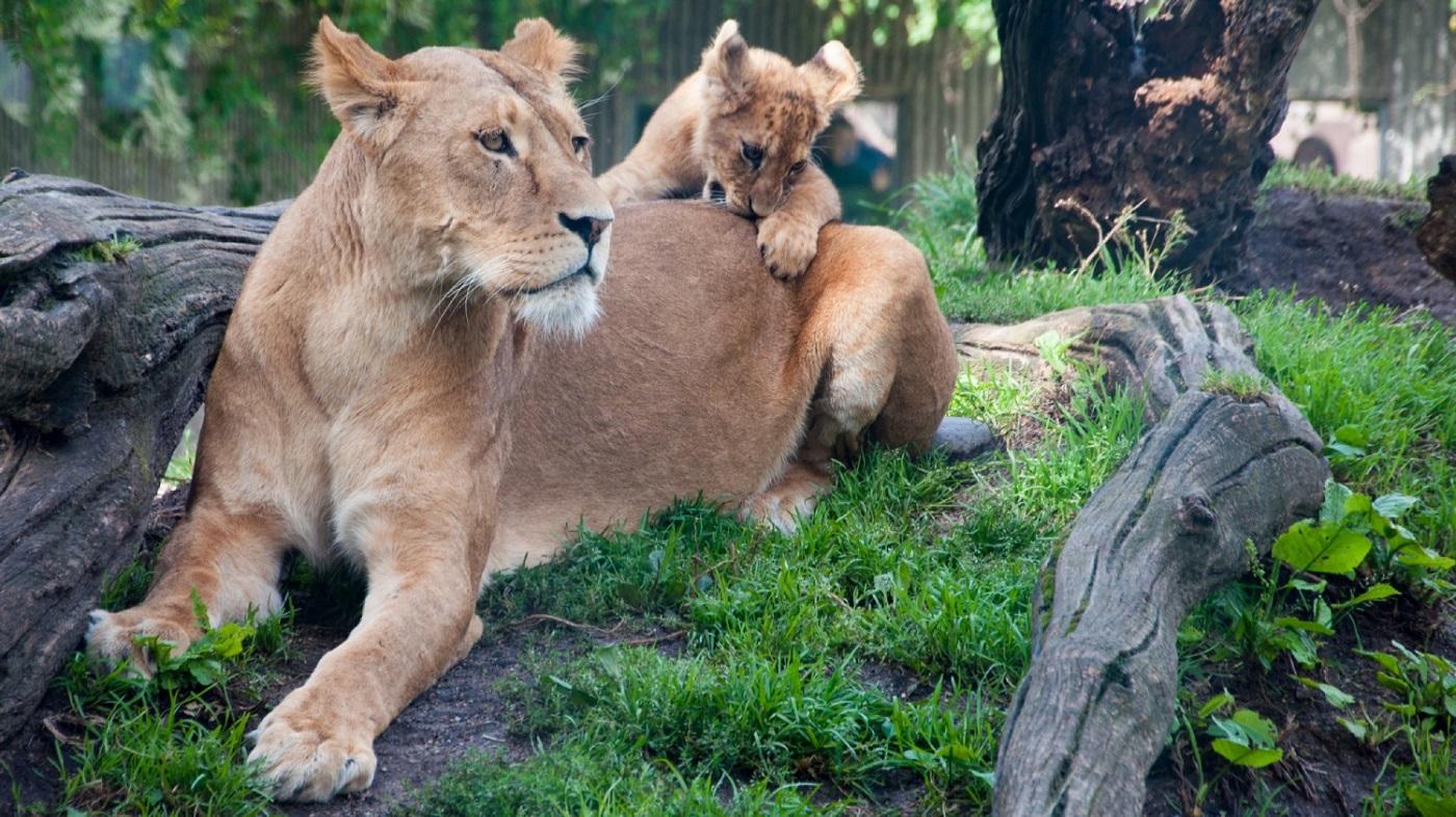 Copenhagen Zoo - Things To Do In Copenhagen