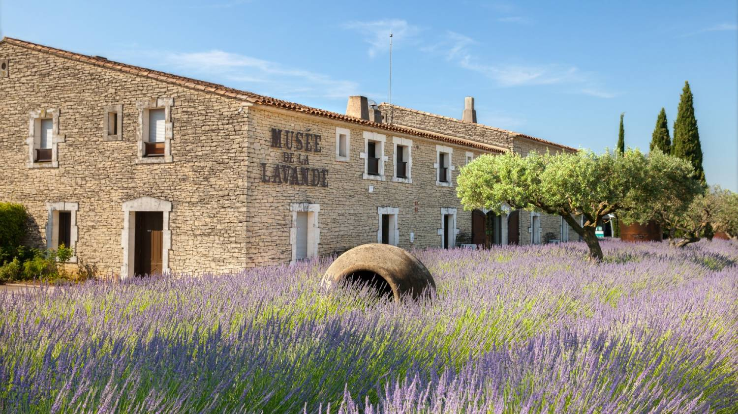 Coustellet Lavender Museum - Things To Do In Avignon