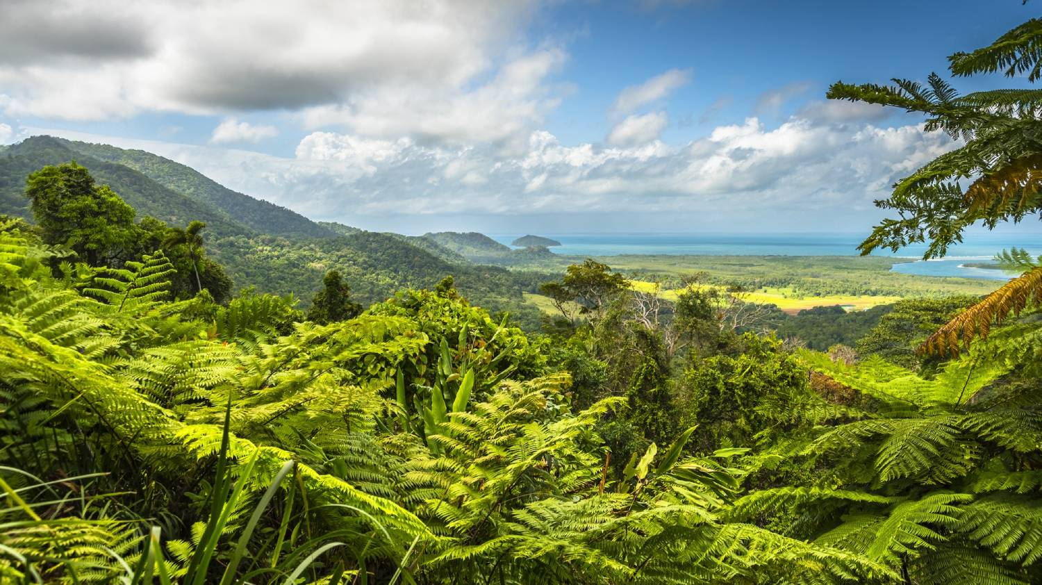 Daintree Rainforest - Things To Do In Cairns