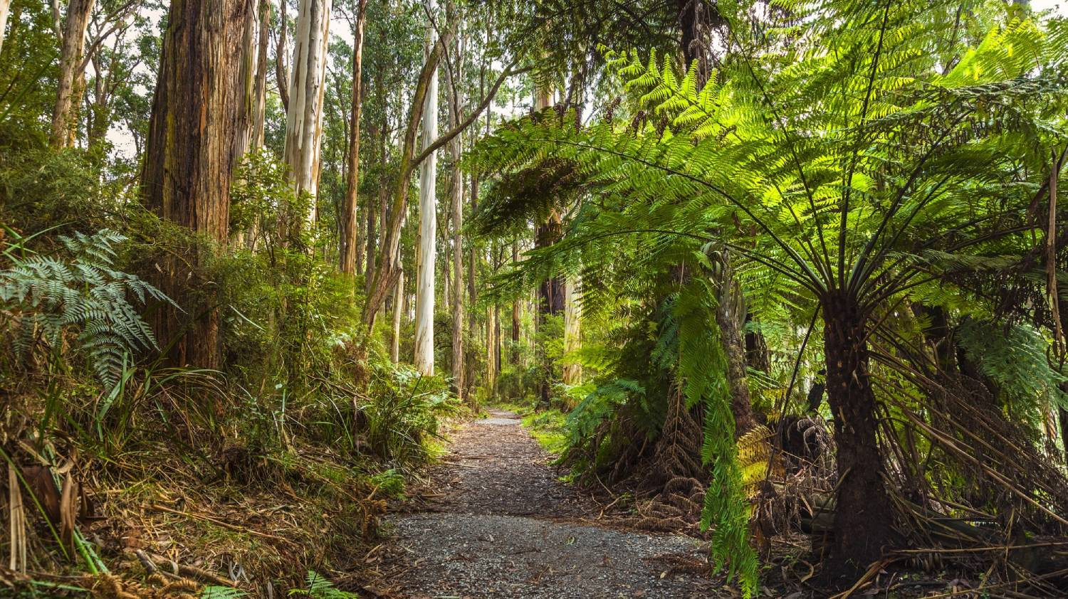Dandenong Ranges - Things To Do In Australia