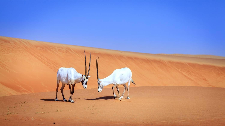Dubai Desert Conservation Reserve - Things To Do In Dubai