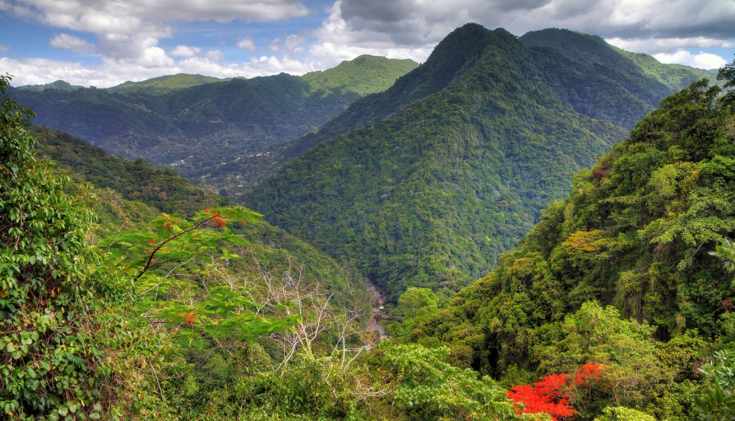 El Yunque Rainforest - Things To Do In San Juan