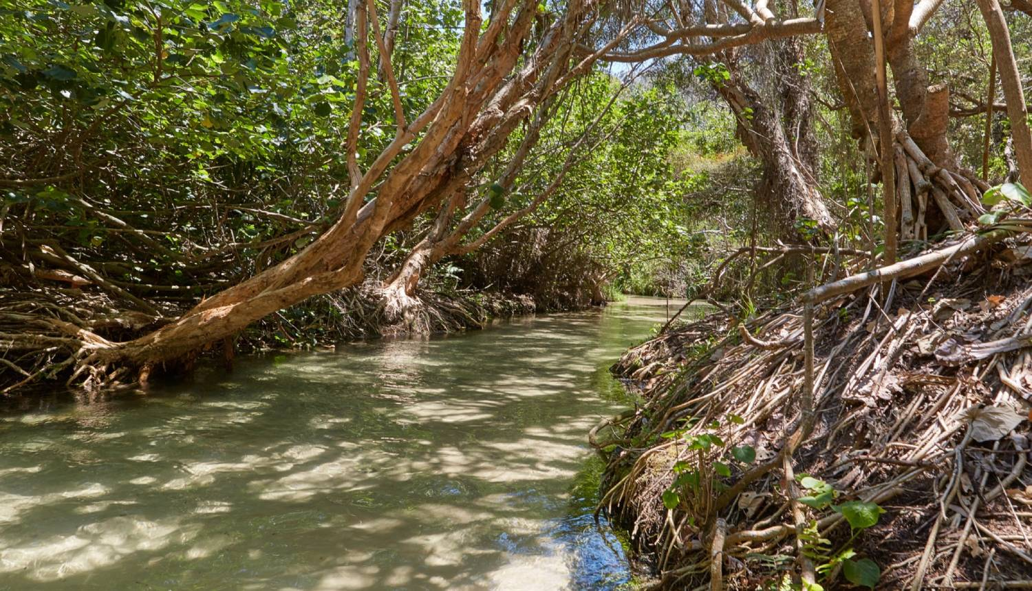 Eli Creek - Things To Do On Fraser Island