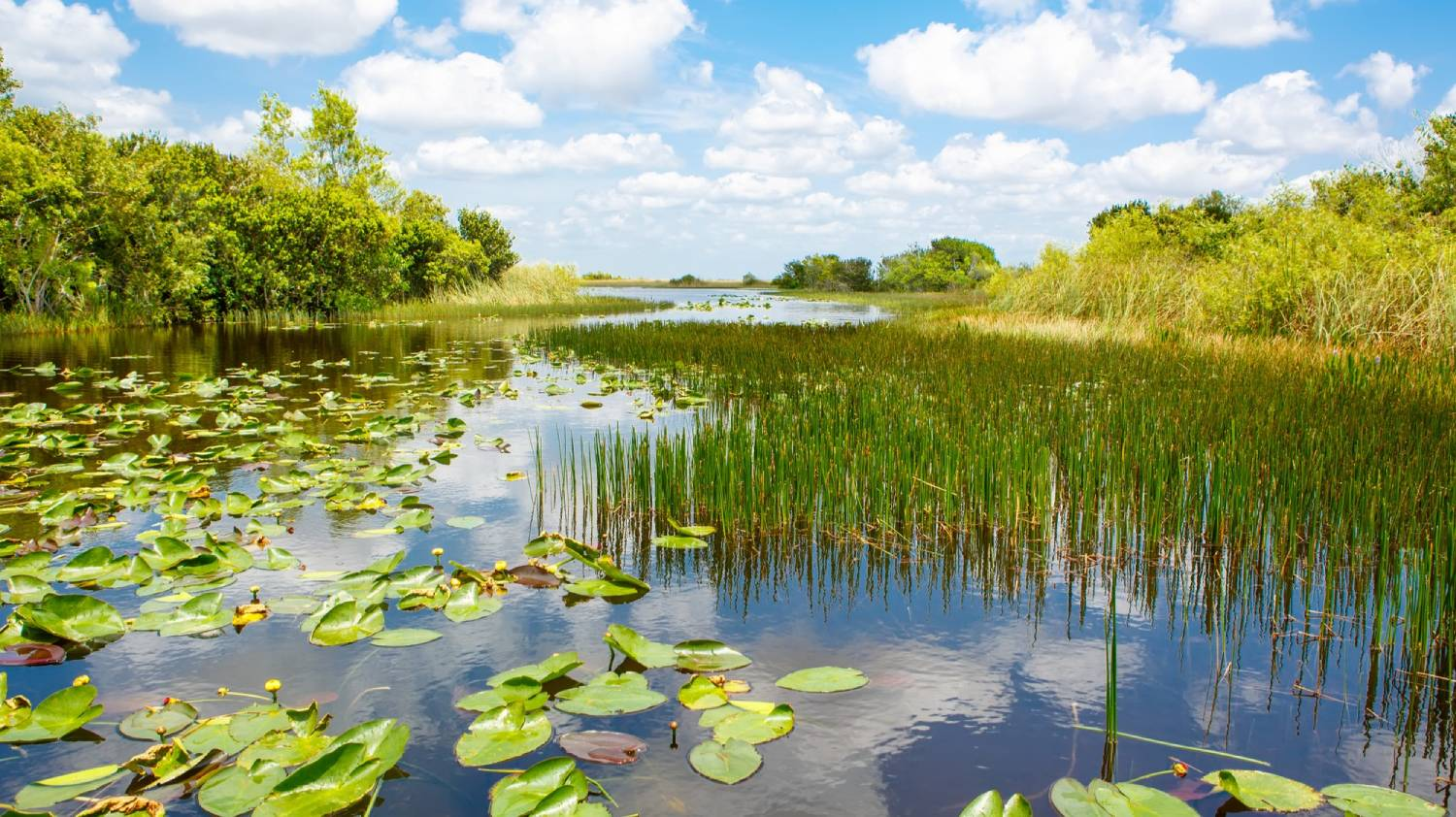 Everglades National Park - Things To Do In Miami