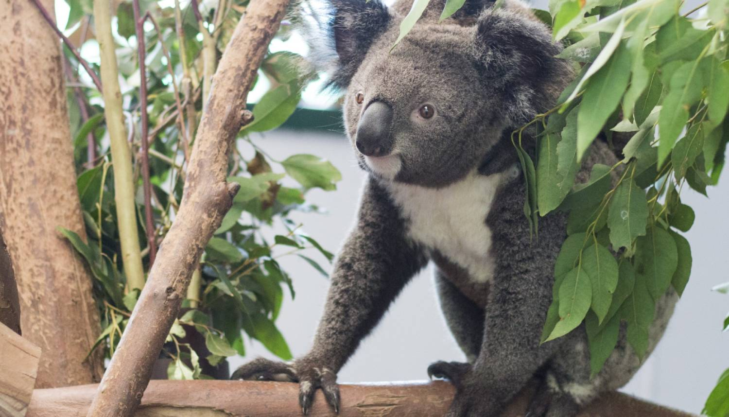 Featherdale Wildlife Park - Things To Do In Sydney