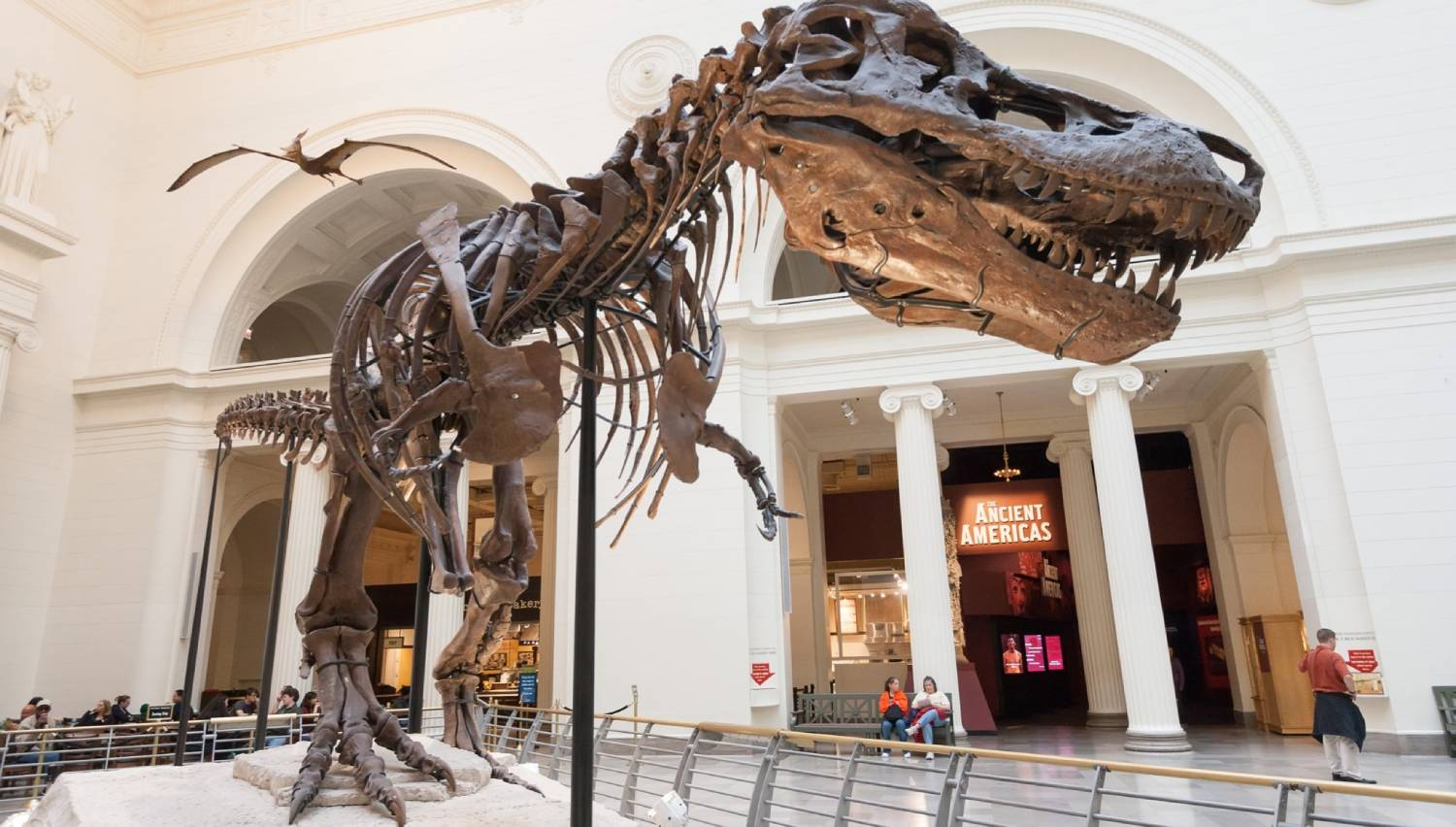 Field Museum of Natural History - Things To Do In Chicago