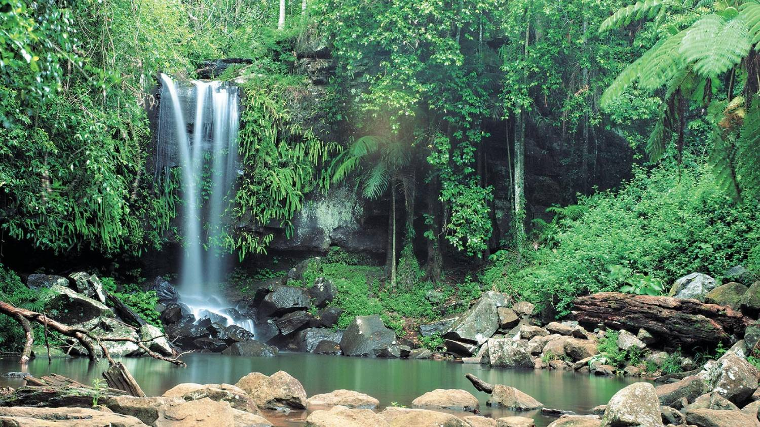 Gold Coast Hinterland - Things To Do On The Gold Coast