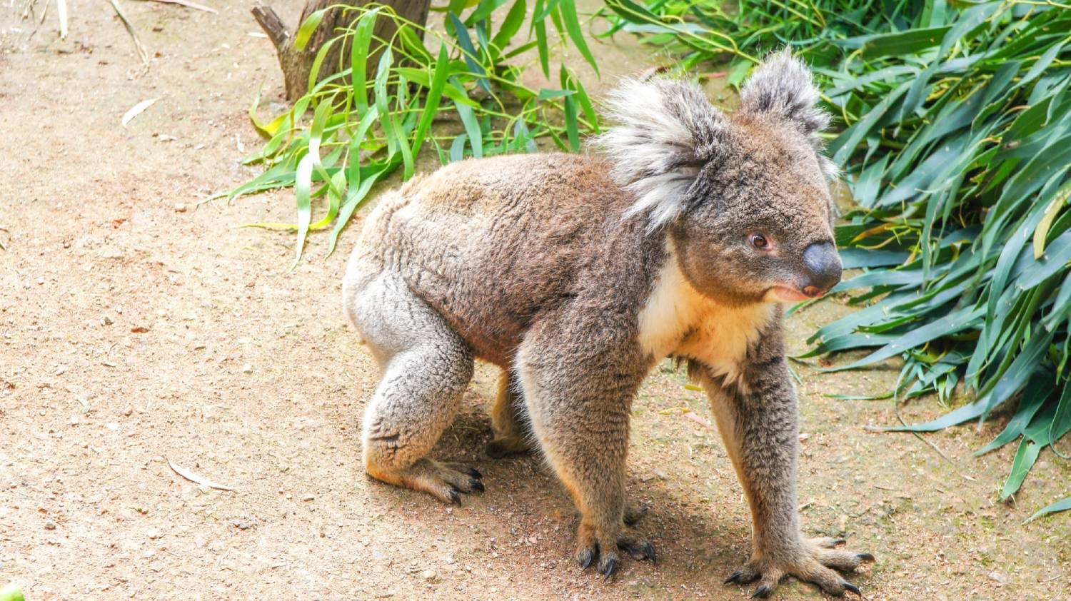 Healesville Sanctuary - Things To Do In Melbourne