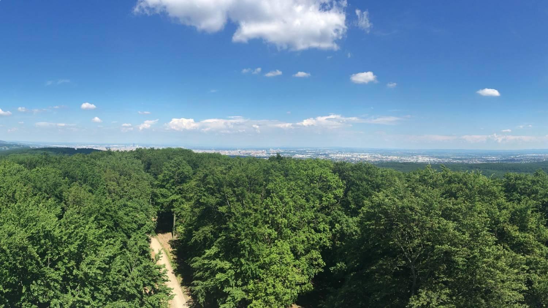 Hirschgstemm - Lainzer Tiergarten - Things To Do In Vienna