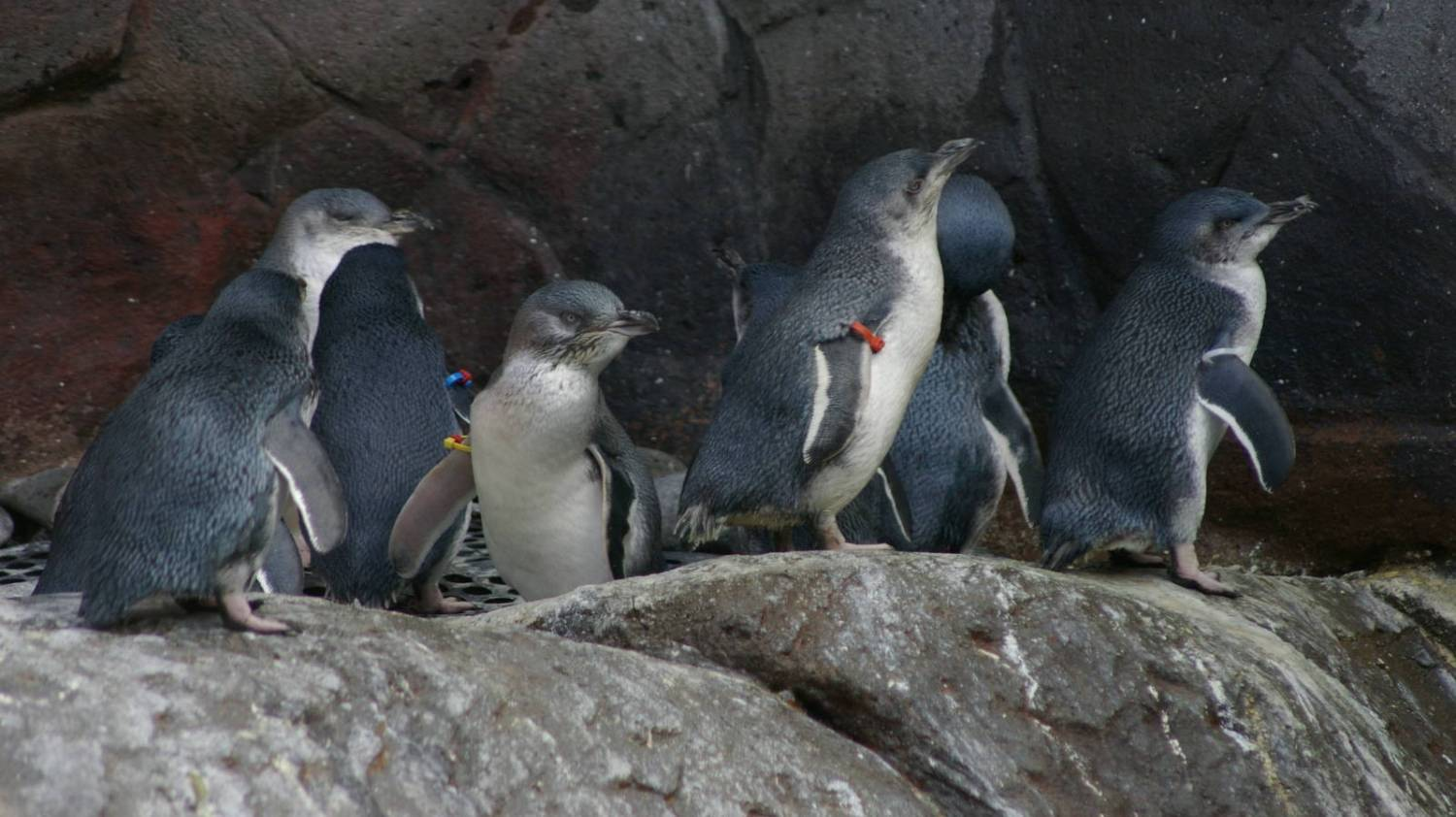 International Antarctic Centre - Things To Do In Christchurch
