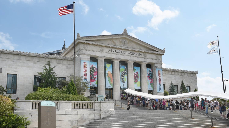 John G. Shedd Aquarium - Things To Do In Chicago