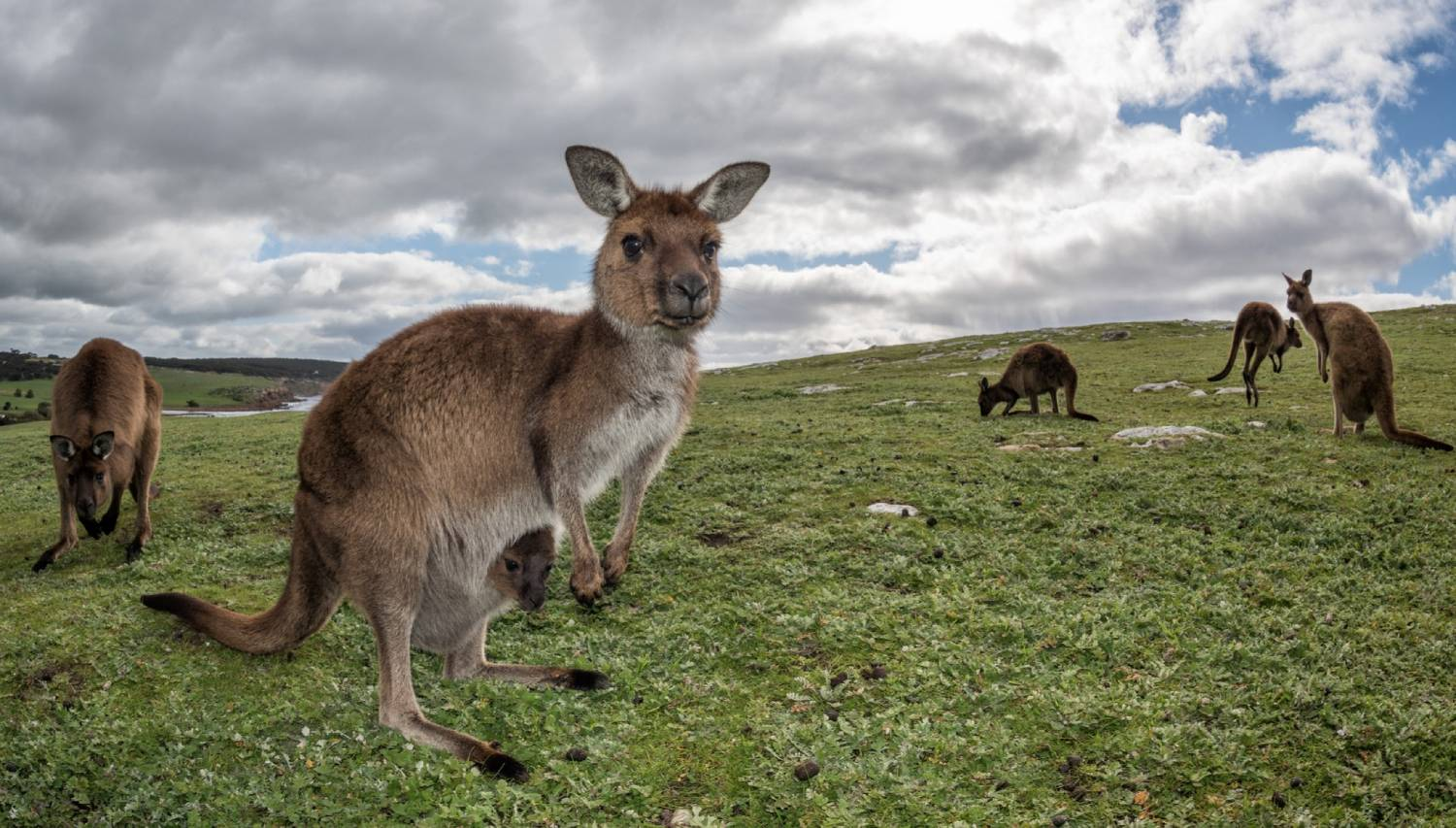 Kangaroo Island - The Best Places To Visit In Australia