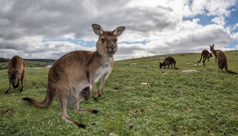 Kangaroo Island - Things To Do In Adelaide