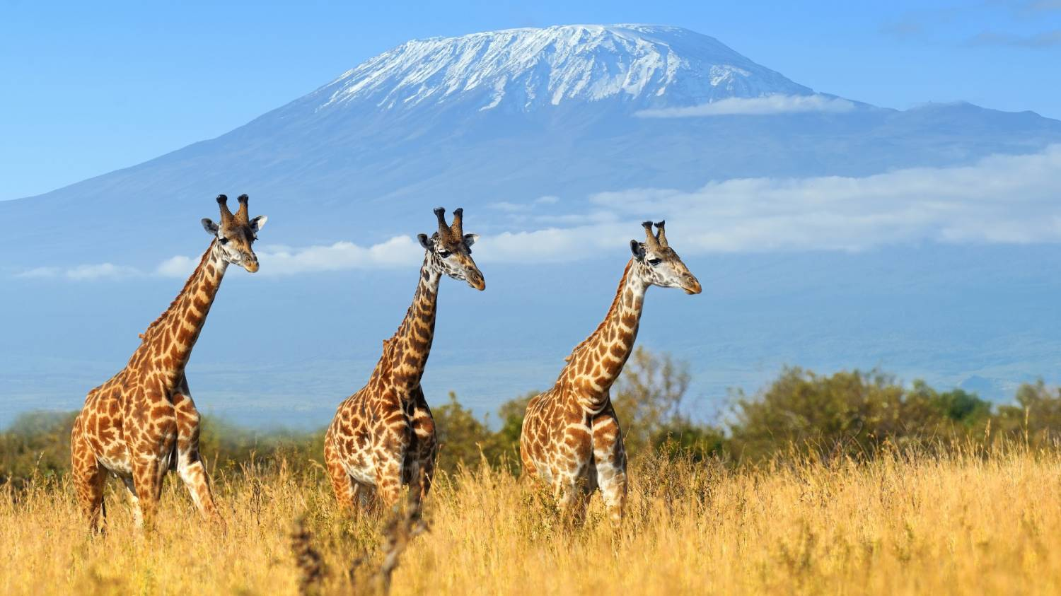 Kenya - The Best Countries To Visit In Africa