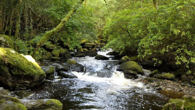 Killarney National Park - Things To Do In Killarney