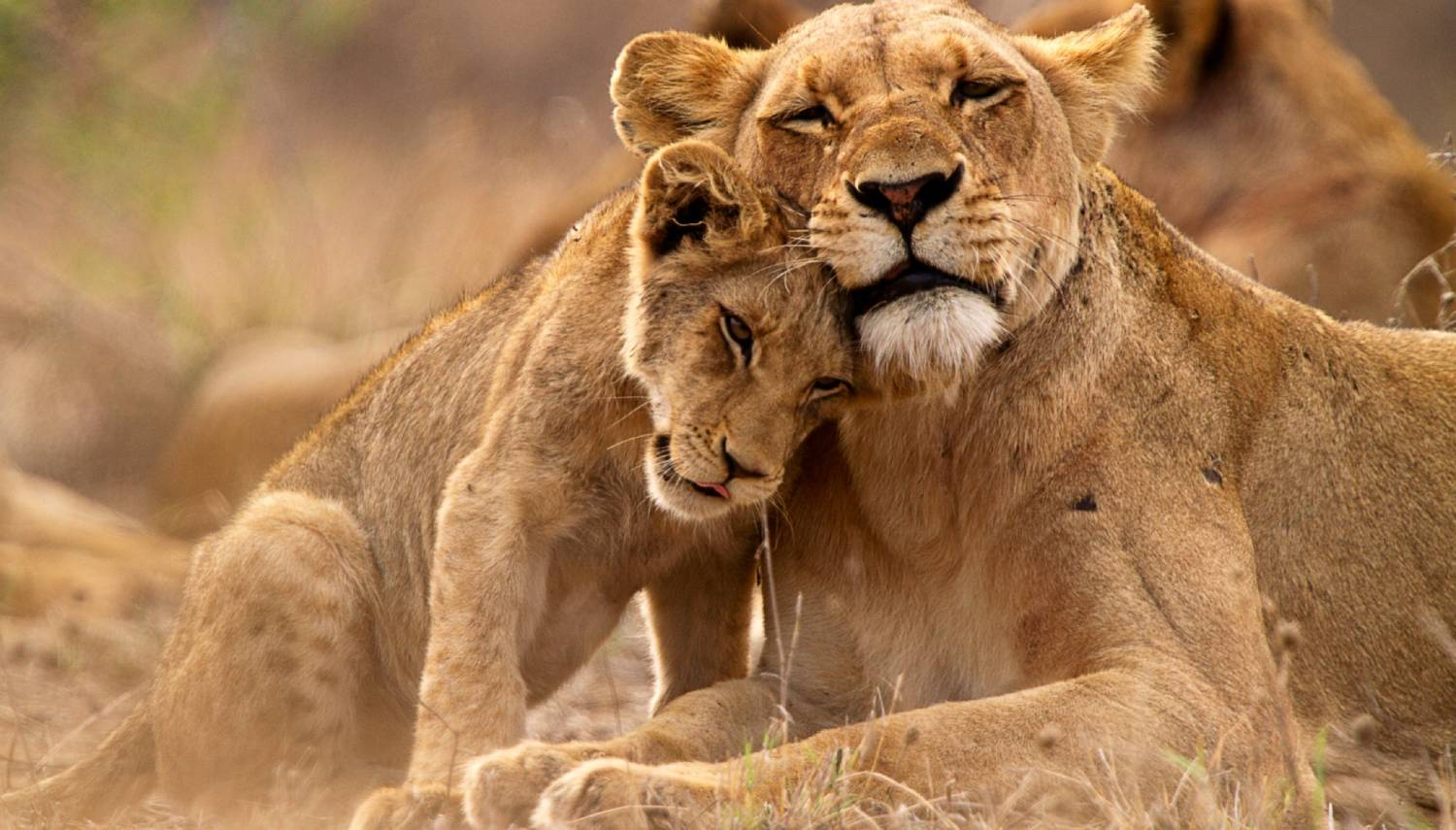 Kruger National Park - The Best Places To Visit In South Africa