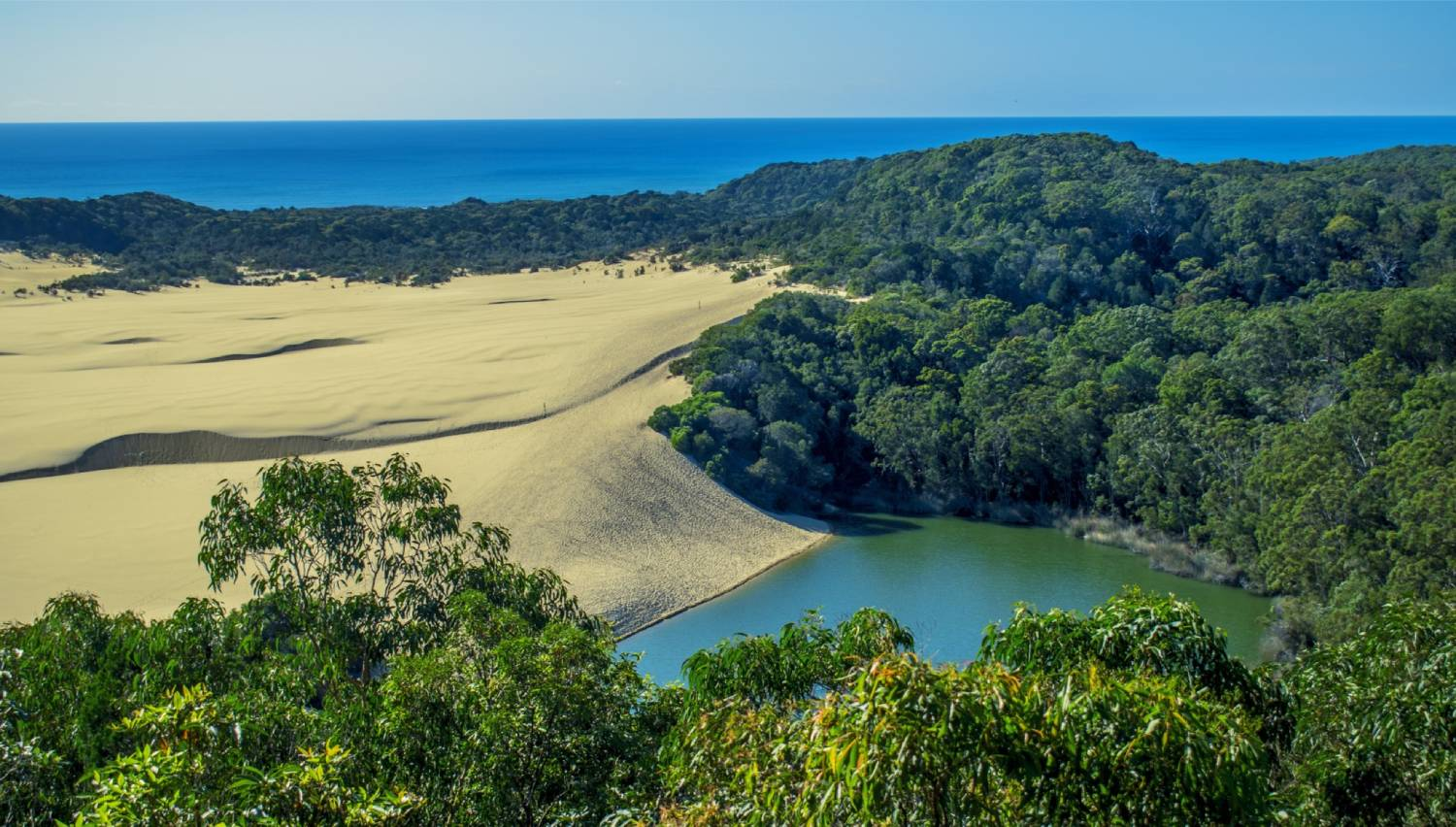 Lake Wabby - Things To Do On Fraser Island