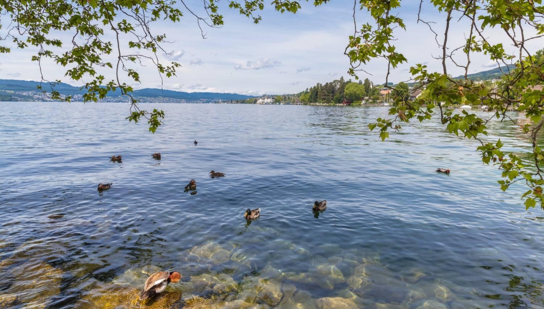 Lake Zurich - The Best Places To Visit In Switzerland