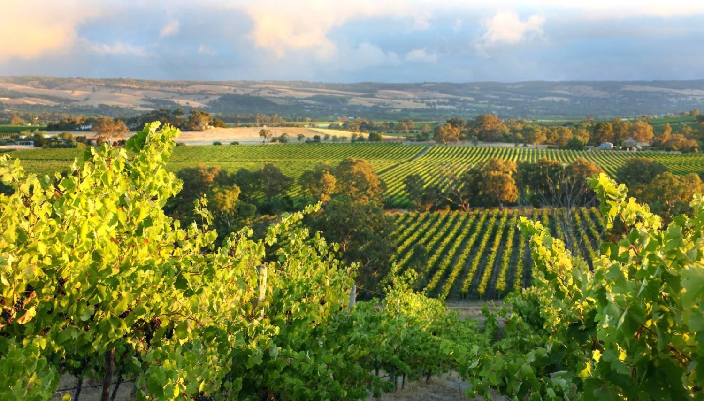 McLaren Vale - The Best Places To Visit In Australia