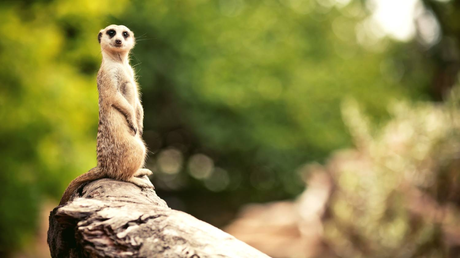 Melbourne Zoo - Things To Do In Melbourne