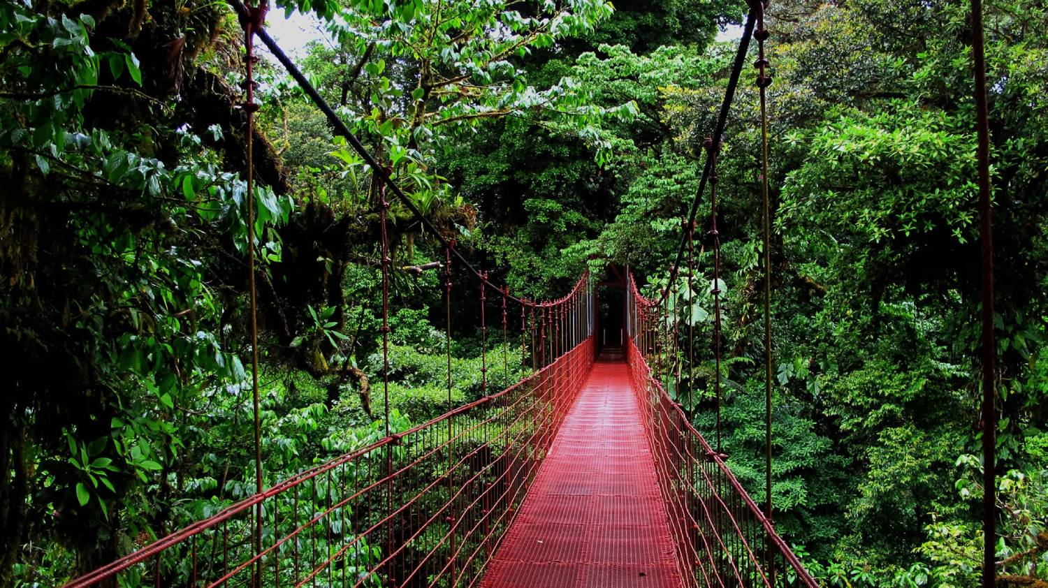 Monteverde - The Best Places To Visit In Costa Rica