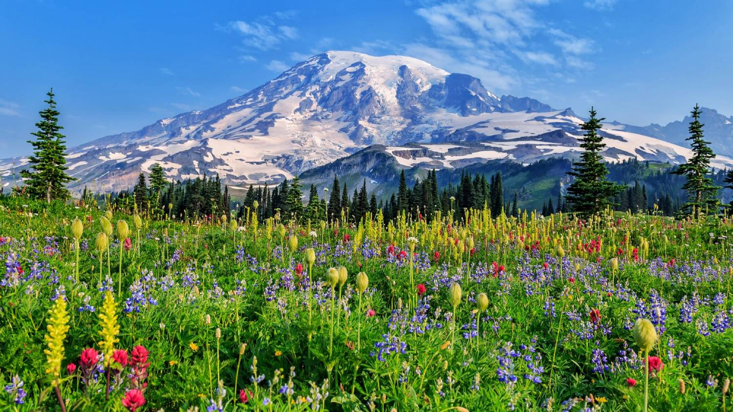 Mount Rainier National Park - Things To Do In Seattle