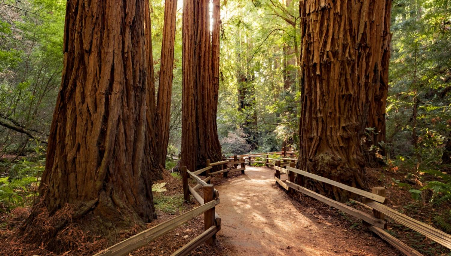 Muir Woods - Things To Do In San Francisco
