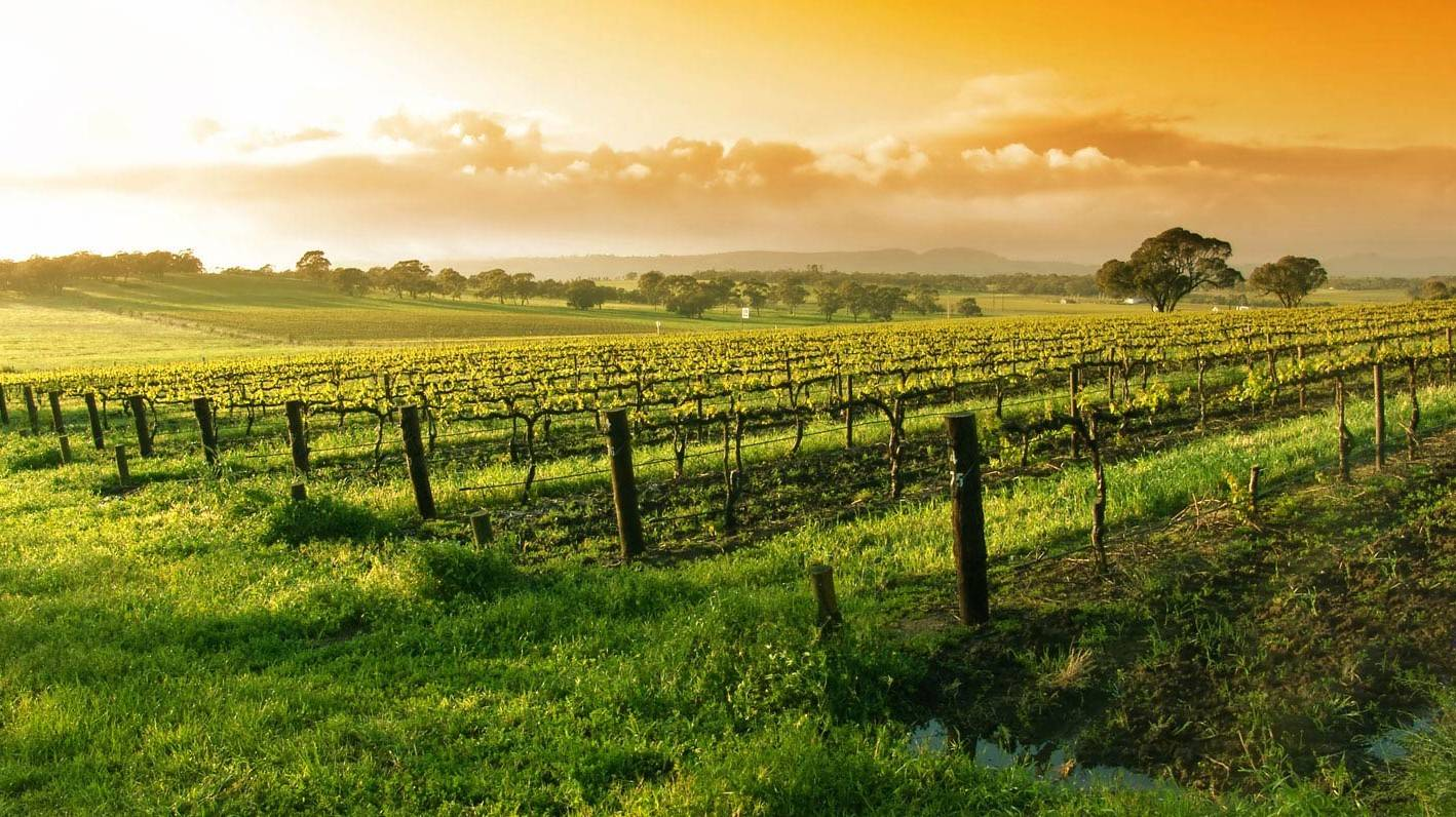 Napa Valley - Things To Do In San Francisco