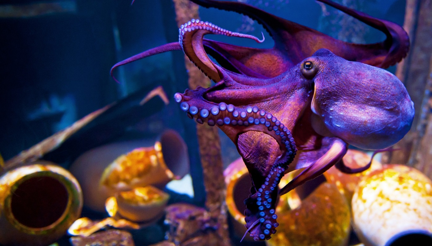 National Aquarium Denmark - Things To Do In Copenhagen