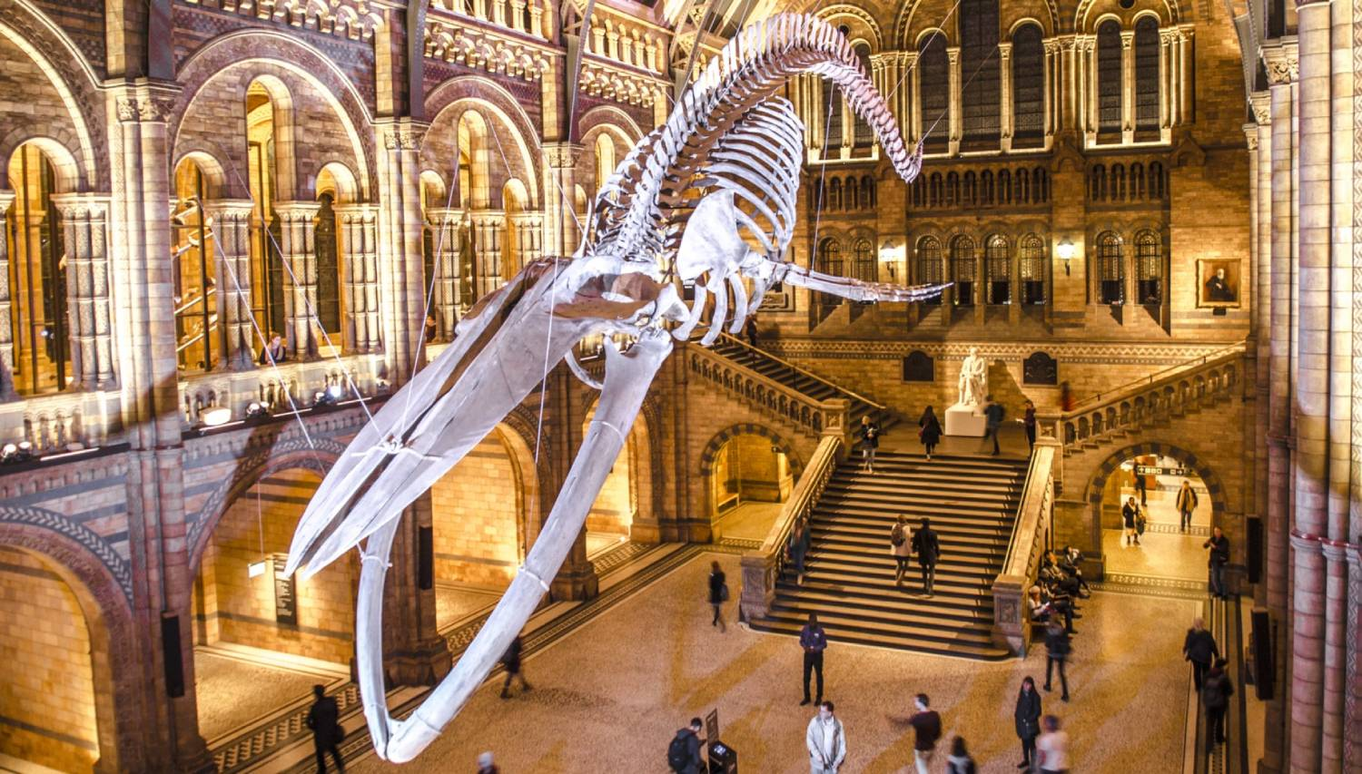 Natural History Museum London - Things To Do In London