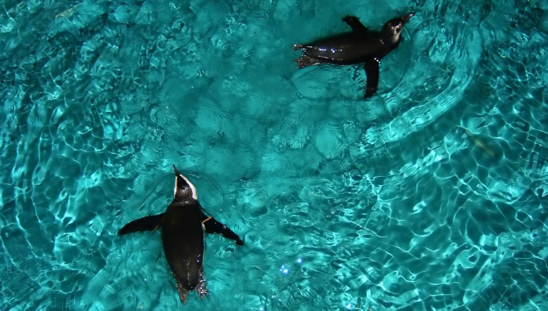 New England Aquarium - Things To Do In Boston