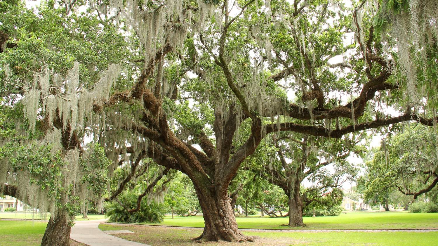 New Orleans City Park - Things To Do In New Orleans