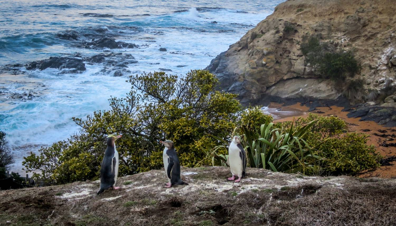 Penguin Place - Things To Do In Dunedin