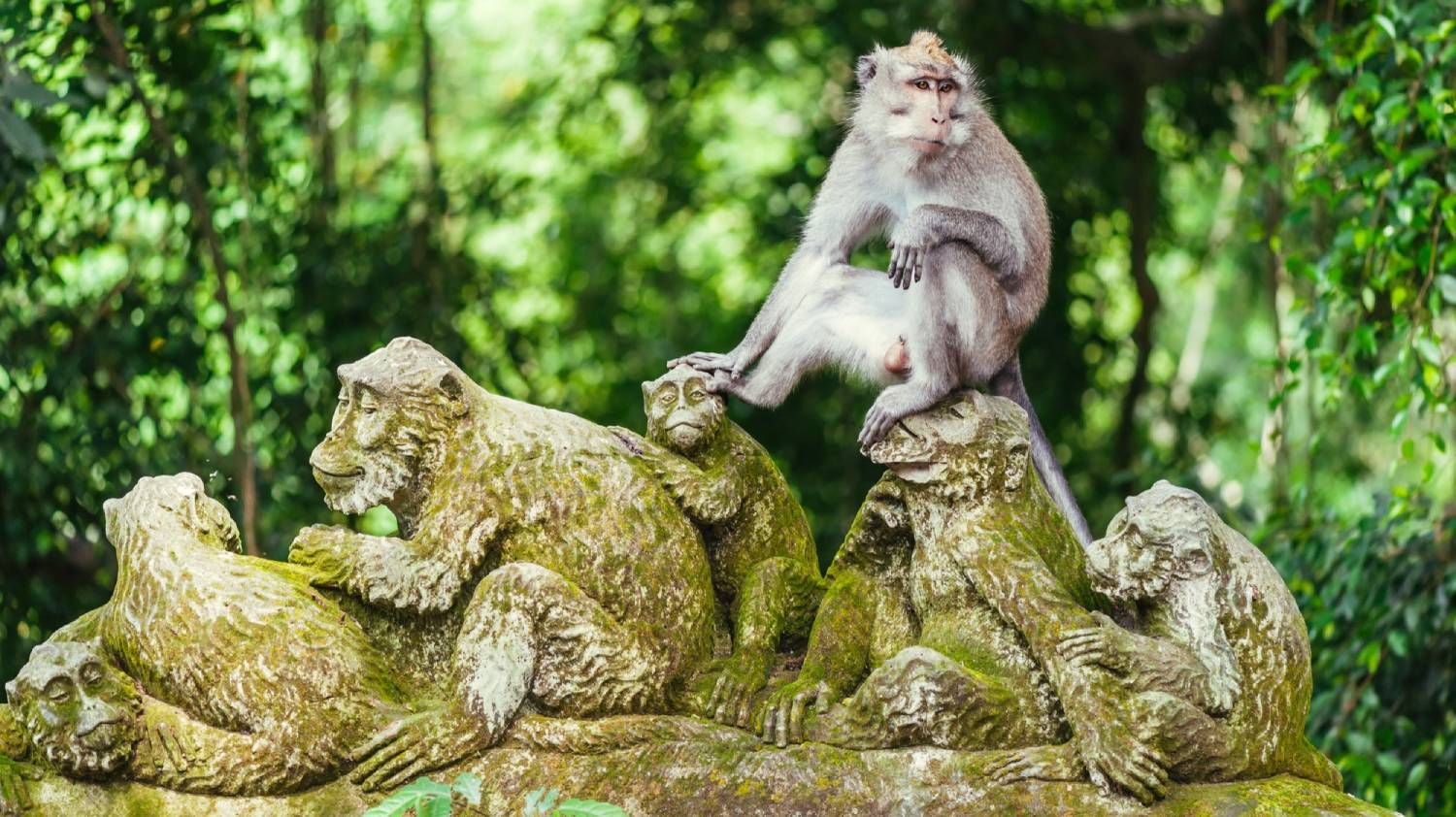Sacred Monkey Forest Sanctuary - Things To Do In Bali